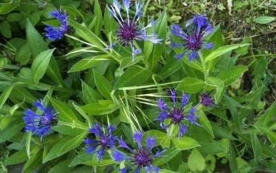 Des fleurs dans notre jardin