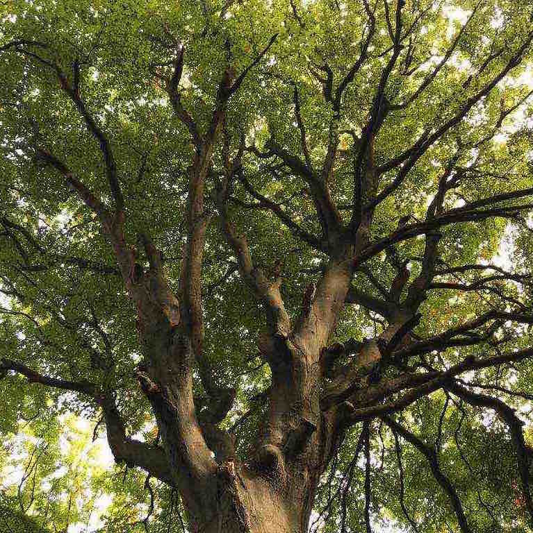 Magie des arbres au Bois de Cise, lesbeauxjours en Baie de Somme, Chambres & Tables d'hôtes