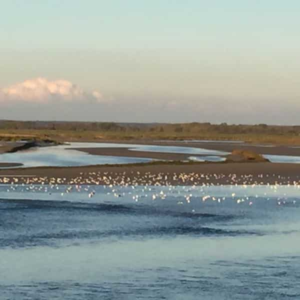 oiseaux survolants la somme, les beaux jours en Baie de Somme, chambres d'hôtes