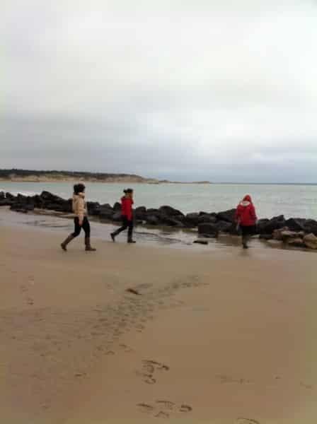 Où voir les phoques ? Balade en Baie d'Authie, les beaux jours en Baie de Somme