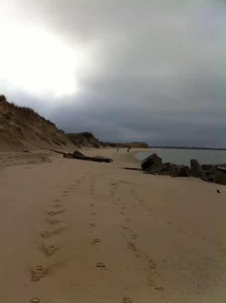 Phoques et dunes à Berck sur Mer en Baie d'Authie les beaux jours en Baie de Somme