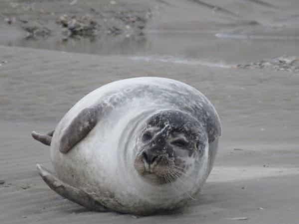 découvrez les phoques en Baie de Somme ou Baie d'Authie, les beaux jours en Baie de Somme, chambres d'hôtes