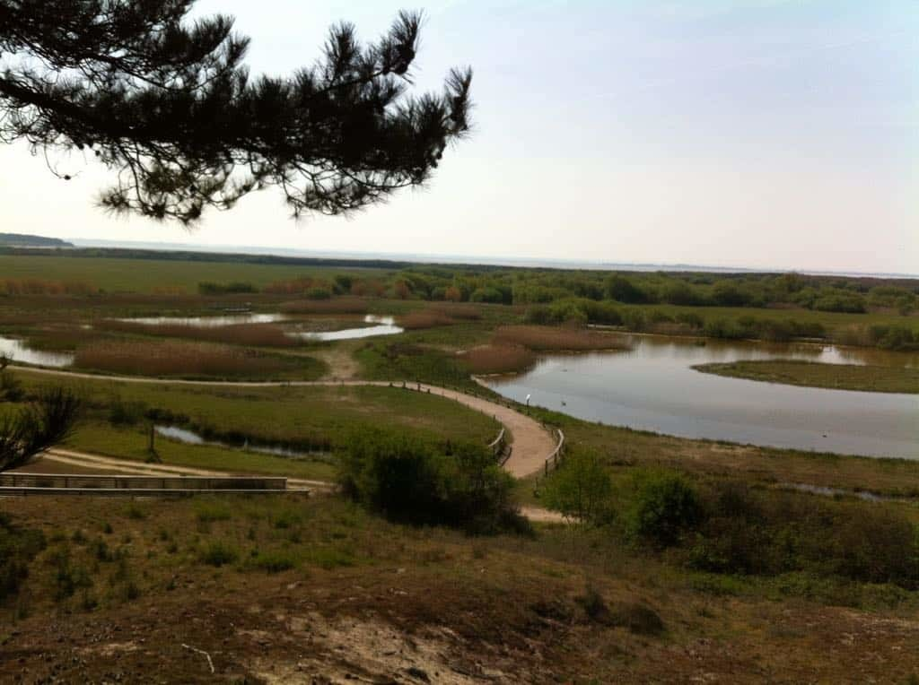 vue panoramique sur la Parc du Marquenterre