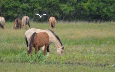 Où faire du cheval en Baie de Somme ?