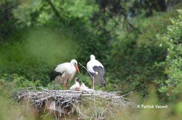 Cigognes au Parc du Marquenterre, votre séjour en Baie de Somme - lesbeauxjours, Chambres & Tables d'hôtes