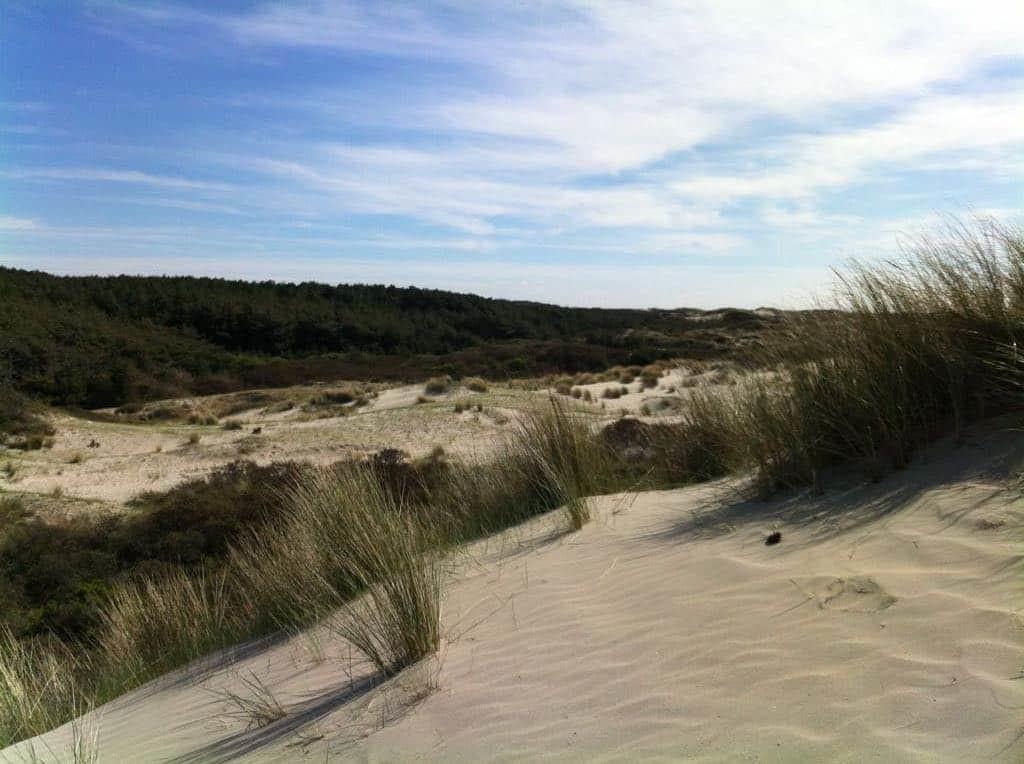 Entre plage, dunes et forêt au coeur de la réserve du Marquenterre
